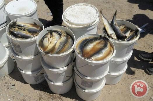 Bedorven vis