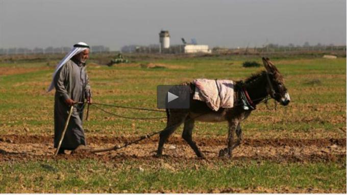Palestijn aan het werk op zijn land