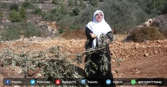 olijfboomgaard-vernietigd