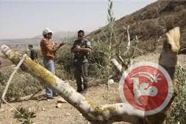 olijfbomen-vernietigen