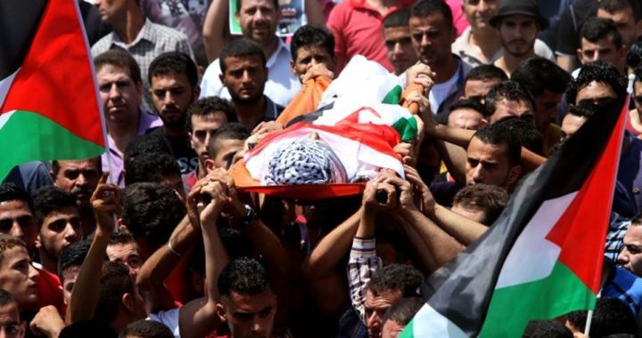319 Palestinians killed