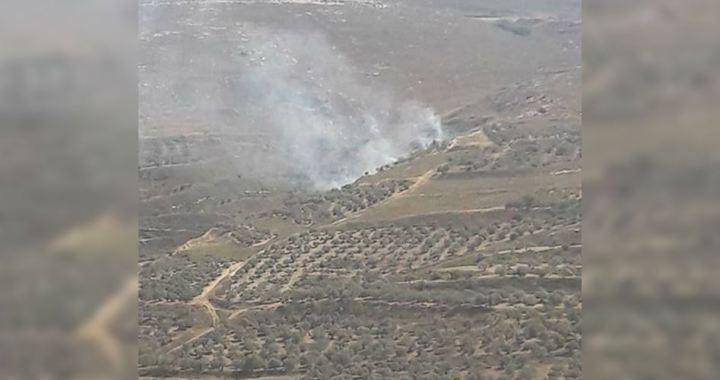 Burn down olive trees