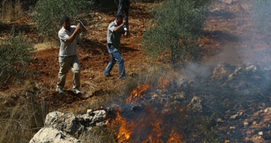 Settlers torch land