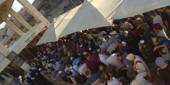 1000 settlers Al Aqsa